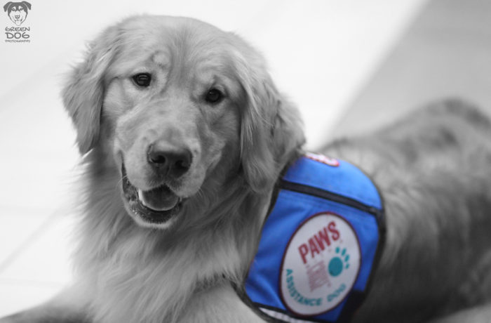 Assistance Dogs – 8744