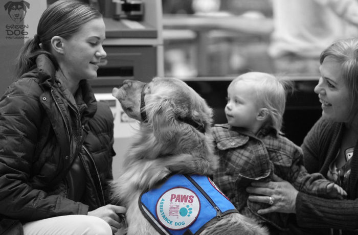 Assistance Dogs – 8802